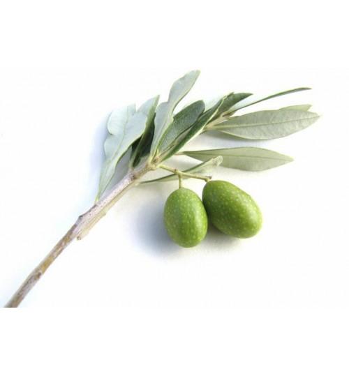 Maslina (OLIVAE OLEUM VIRGINALE) hladno tiješteno biljno ulje