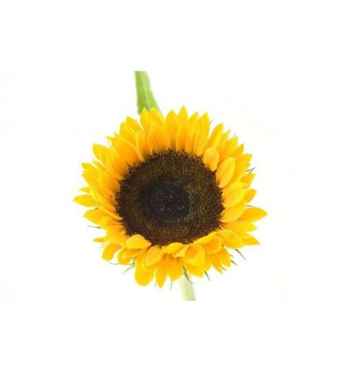 Suncokret (HELIANTHI OLEUM) hladno tiješteno biljno ulje